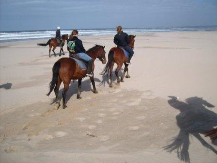 horse trekking - 1st par